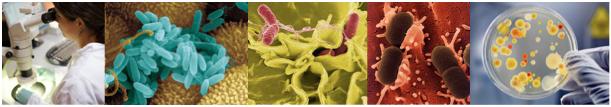 cabecera microbiologia Microbiología de Alimentos y Bebidas