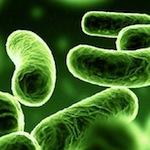 SAFEFOOD-Microbiología